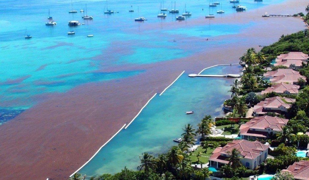 Ocean Cleaner Barriera protezione spiaggia